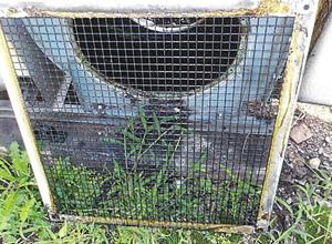 清掃前 防鳥網